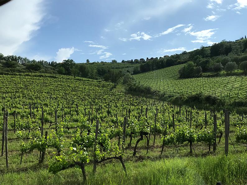 Florenz, Italien, Chianti Tour, Wine Tasting, Panzanello, Chianti Classico
