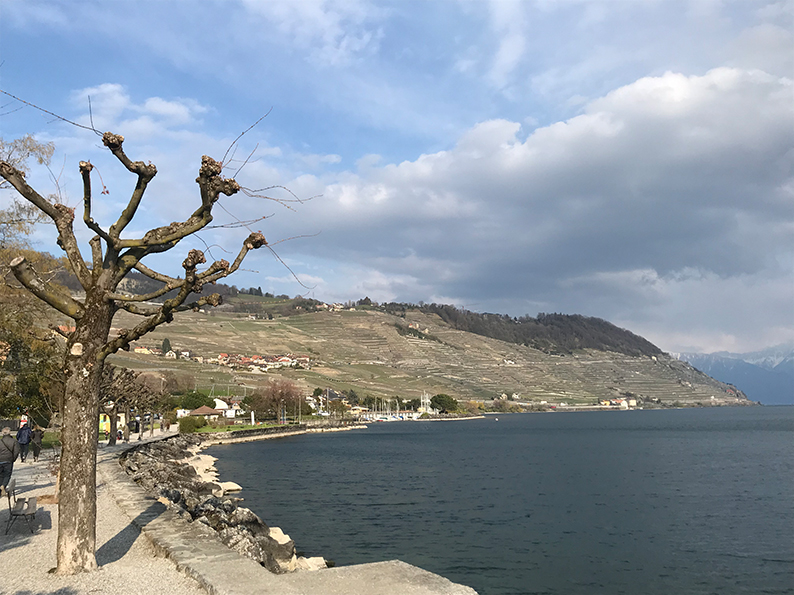 Lavaux, Genfersee, Weinberge, Waadt, Cully