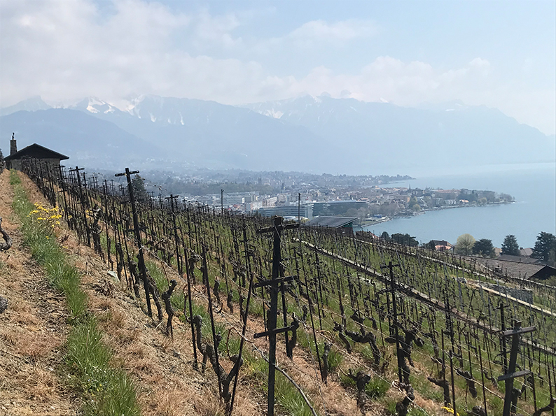 Lavaux, Genfersee, Weinberge, Waadt, Vevey