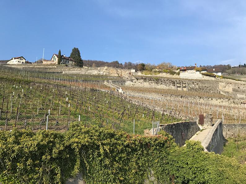 Lavaux, Genfersee, Weinberge, Waadt