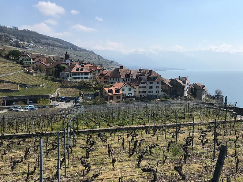 Lavaux, Genfersee, Weinberge, Waadt, Rivaz